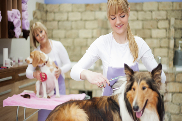 Dog Grooming Course – Graduate Success Story