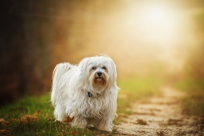 5 dog grooming tips