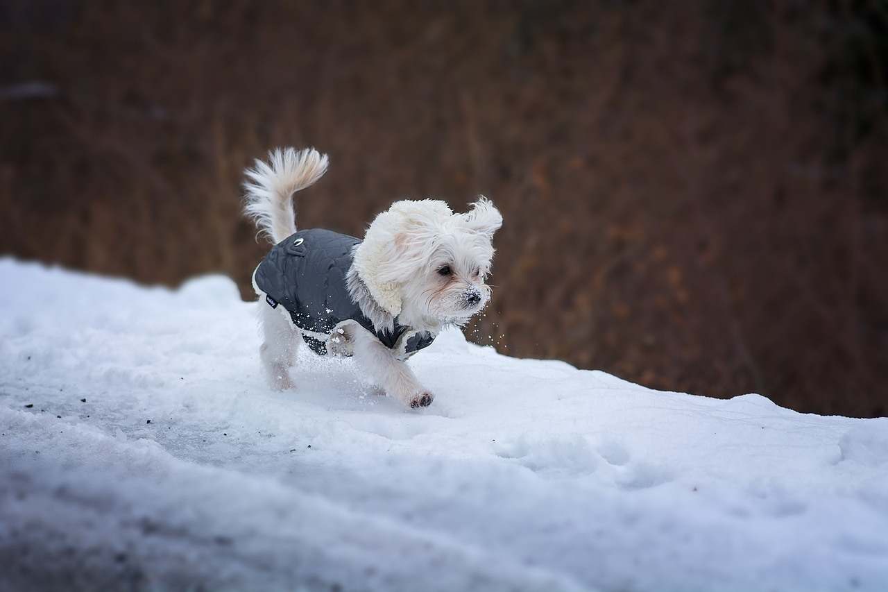 Keep your pets safe during the winter months
