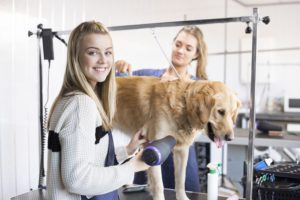 Find out how to become a dog groomer with Stonebridge