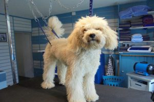 Start your own business with our online dog grooming training
