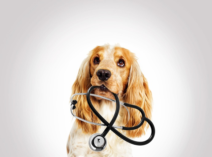 Read This If You Want to Be a Veterinary Assistant
