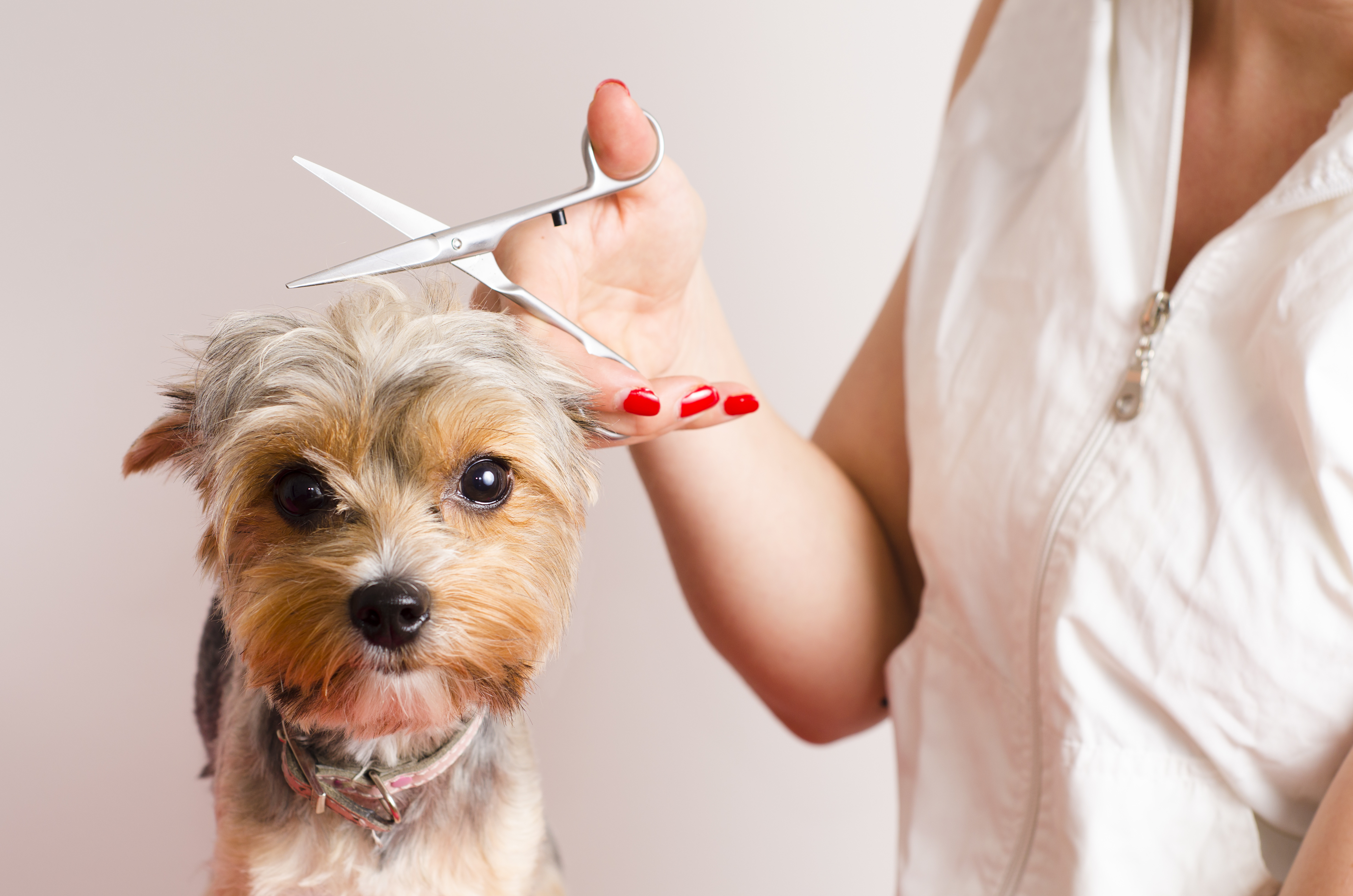 8 Dog Grooming Tools You Can't Do Without