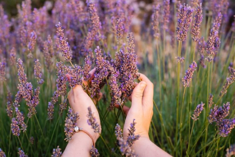 Woman holding lavender in field, being mindful and in touch with her senses.