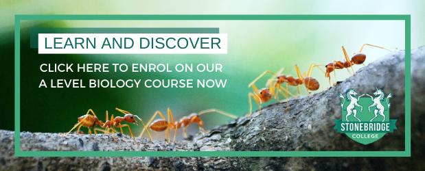 Stonebridge | Should I Take A Level Biology | CTA