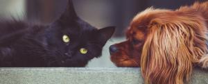 Stonebridge - What careers involve Working with Animals?