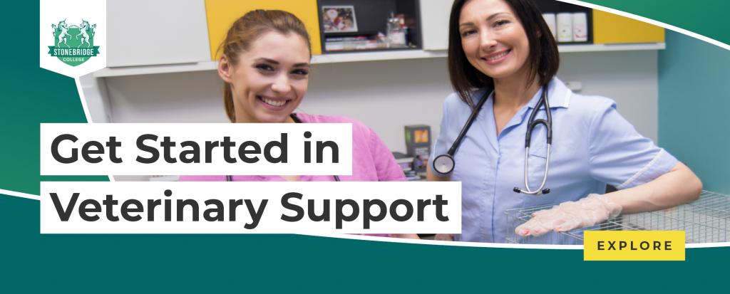 Stonebridge - Get Started in Veterinary Support