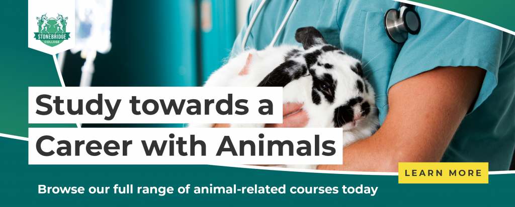 SAC - What are some Careers dealing with Animals? - CTA