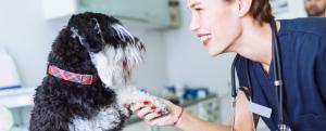 Stonebridge - How to Become a Veterinary Nurse
