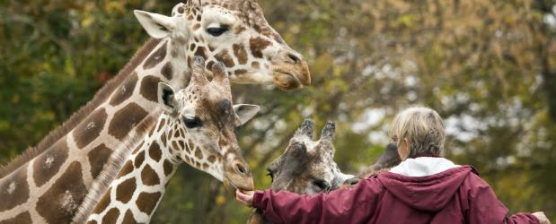 Stonebridge - Zookeeper Career