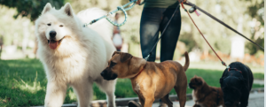 Stonebridge - How to Start a Dog Walking Business