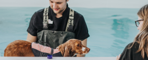 Stonebridge - How to become an Animal Hydrotherapist