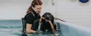 Stonebridge - How to study Animal Hydrotherapy online