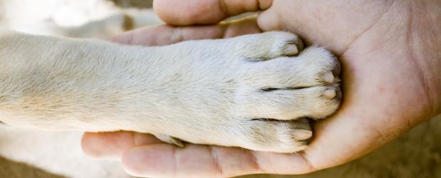 Stonebridge - Animal Care Online Courses