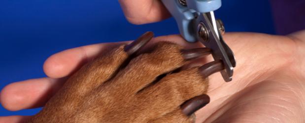 Stonebridge - Animal Care Jobs - Dog Groomer