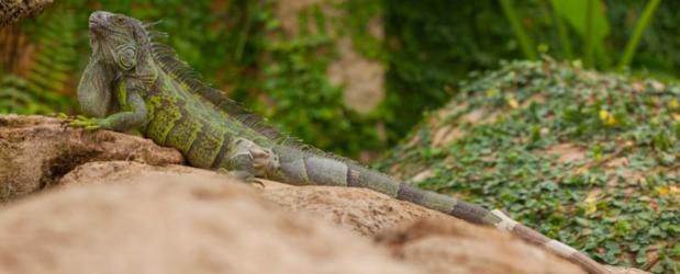 Stonebridge - Animal Care Jobs - Reptile Welfare