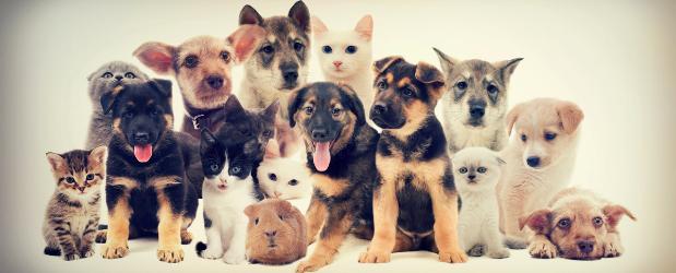Stonebridge - Small Animal Welfare