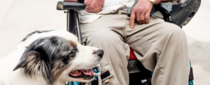 Stonebridge - Which is the Best Breed of Dog for Emotional Support?