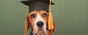 Stonebridge - Can you Work with Animals Without a Degree?