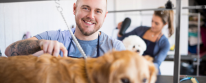 Stonebridge - How Long does it take to Learn How to Groom Dogs?