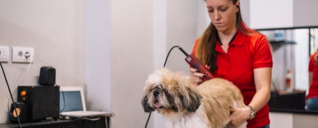 Stonebridge - Learn How to Groom Dogs