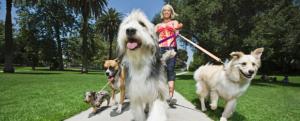 Stonebridge - How to Promote my Dog Walking Business?