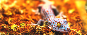 Working with Exotic Animals - Lizard