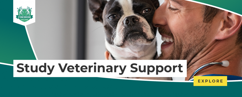 Stonebridge - Study Veterinary Support