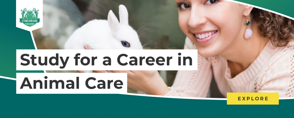 Stonebridge- Study for a Career in Animal Care Online