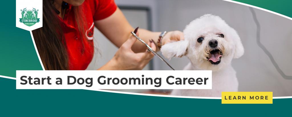 Stonebridge - Start a Dog Grooming Career
