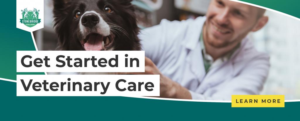 Stonebridge - Get Started in Veterinary Care