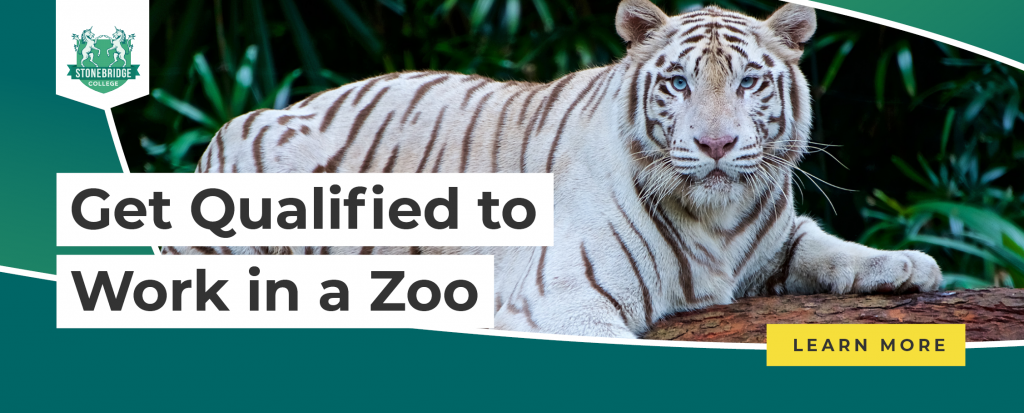 Stonebridge - Get qualified to work in a zoo