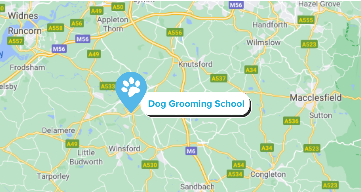 Dog grooming school