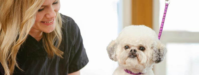 Dog Grooming Professional Course Online Stonebridge Associated College